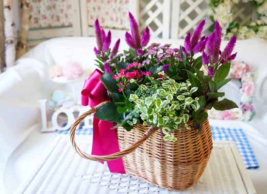 [�����ȭ�Ĺ�]Garden gift basket - Can i do this in my apartment? Of course!!!