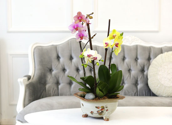 Living with flowers everyday - Newyork style Orchid 세가지의 매력 호접란